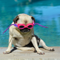 Top Tips to Keep Pets Wildlife Safe Around Your Pool